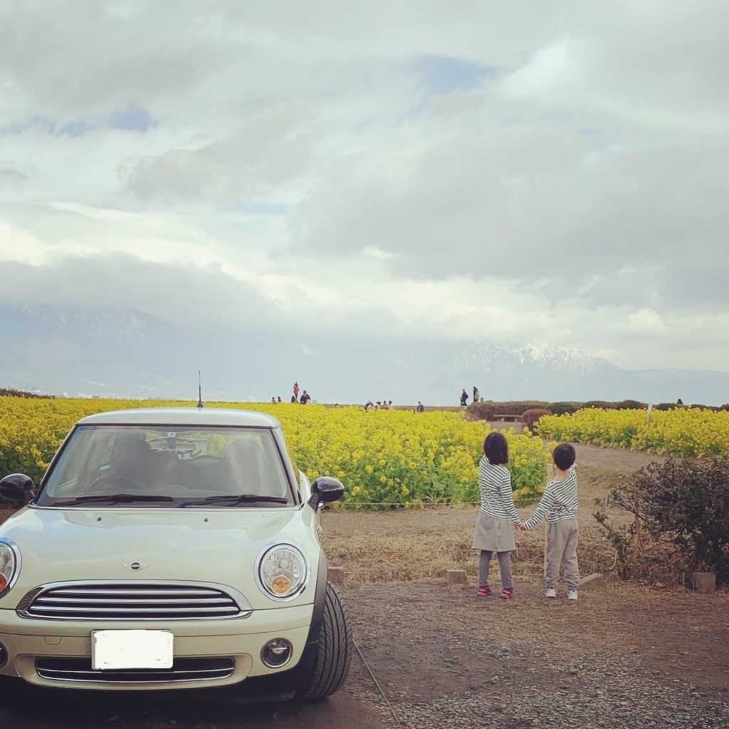 菜の花畑に行きました