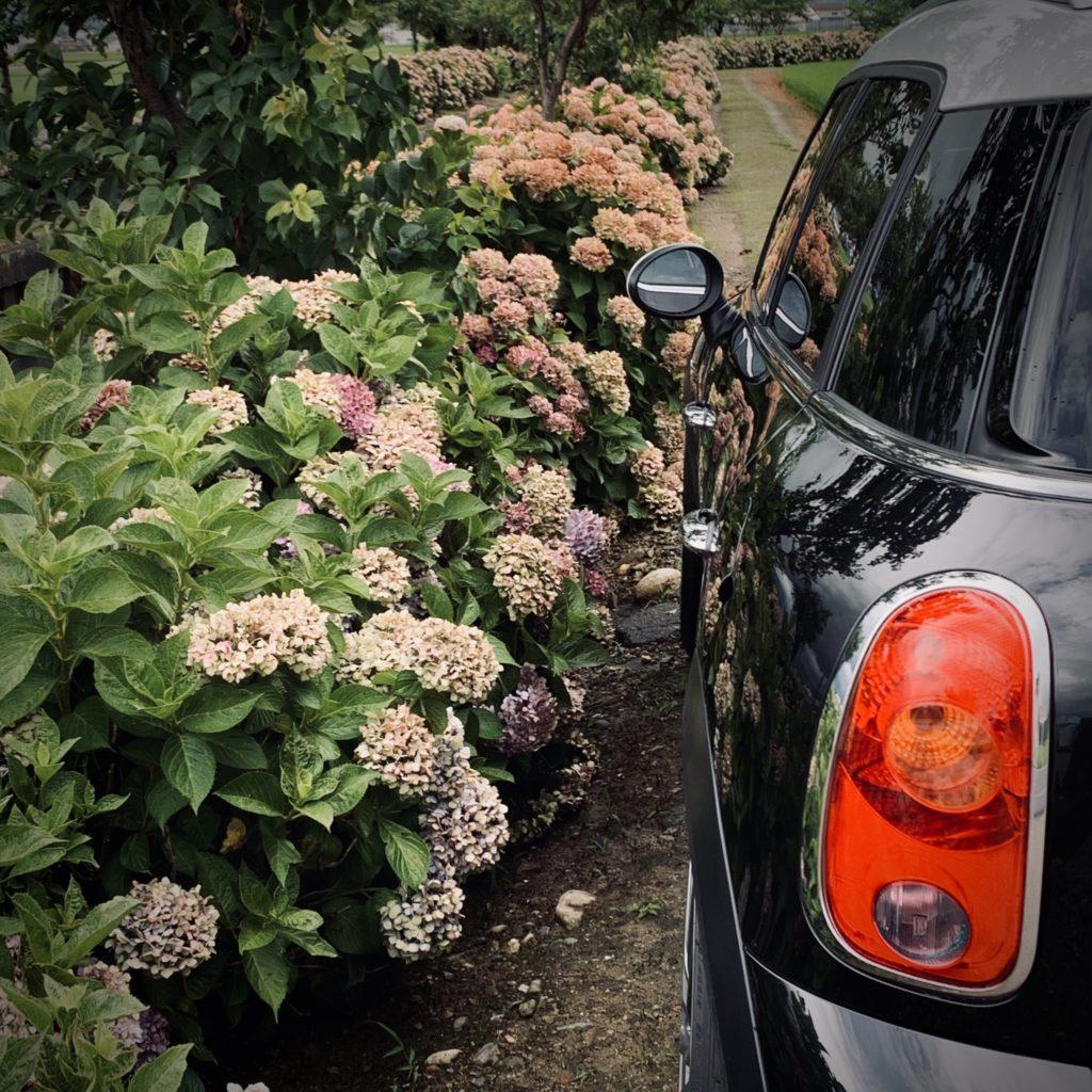 【recommend】ドライブ中にちょっと見つけた紫陽花スポット